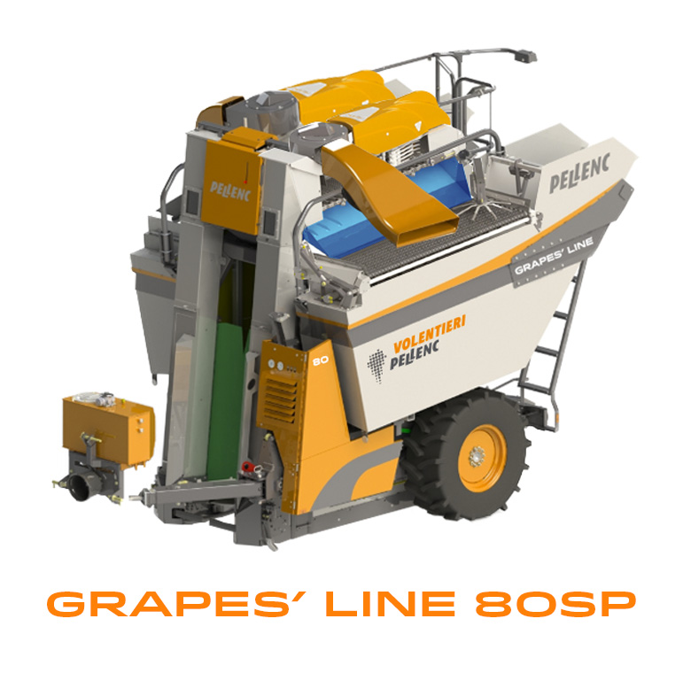 grapes 80