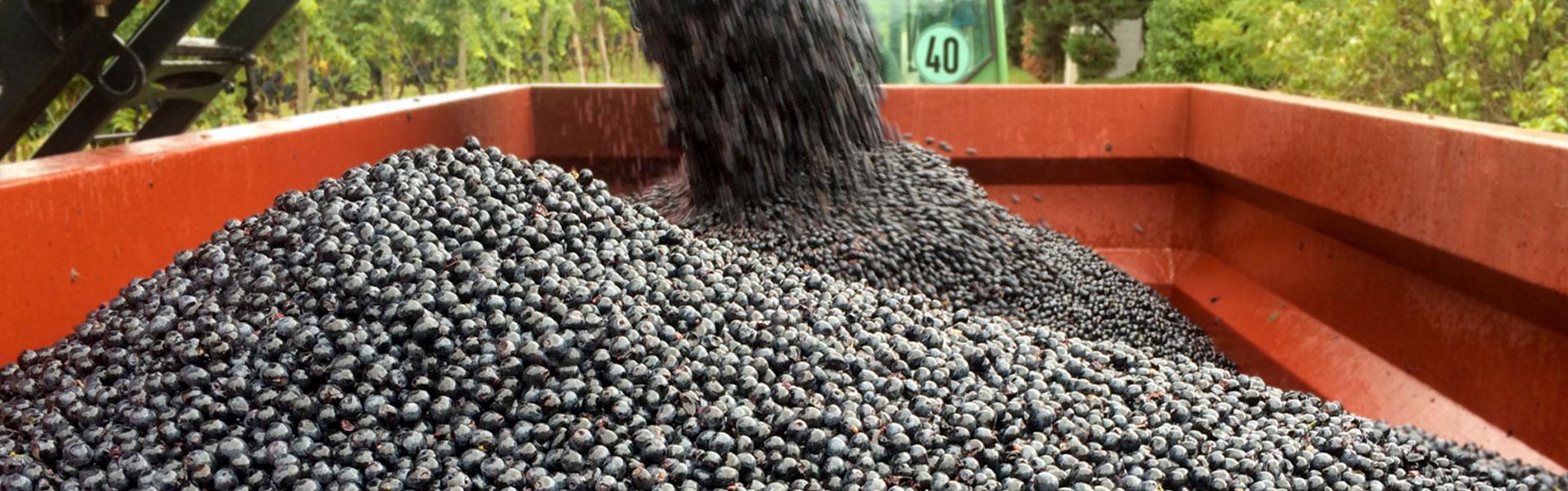 grapes'line80